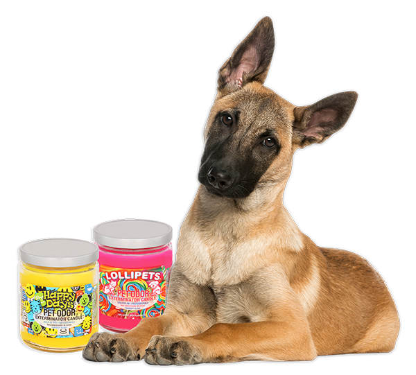 Dog with tilted head and Happy Days and Lollipets candles