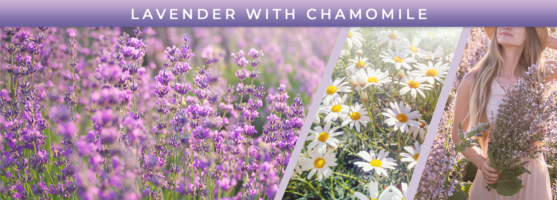 Lavender with Chamomile fragrance elements