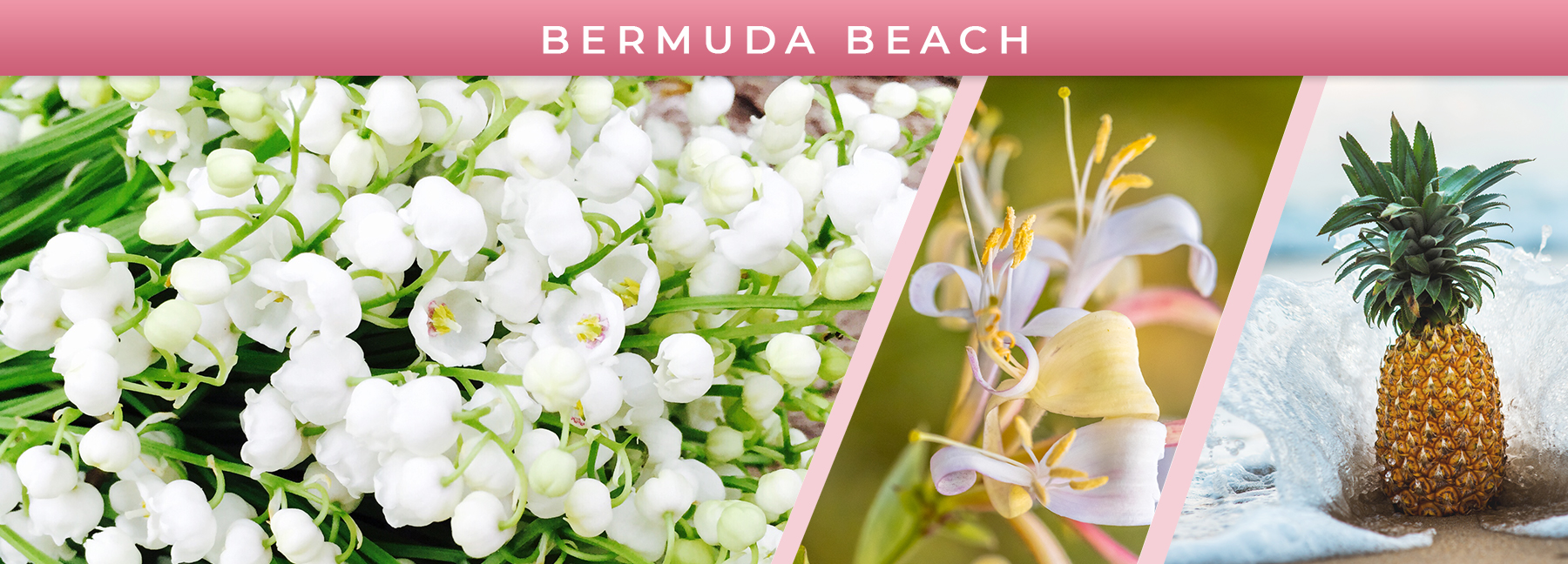 Bermuda Beach fragrance elements