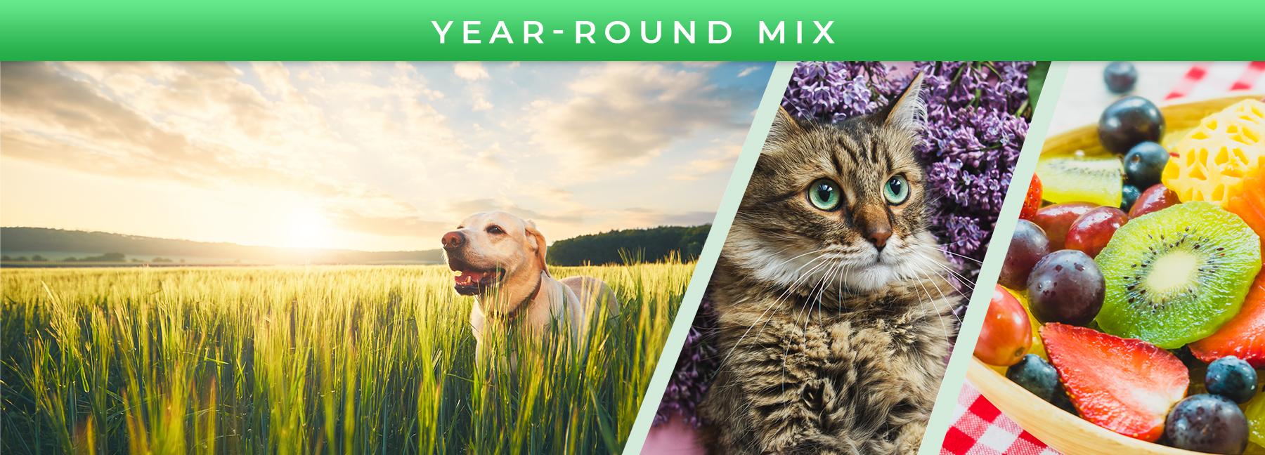 Year-Round Mix fragrance elements